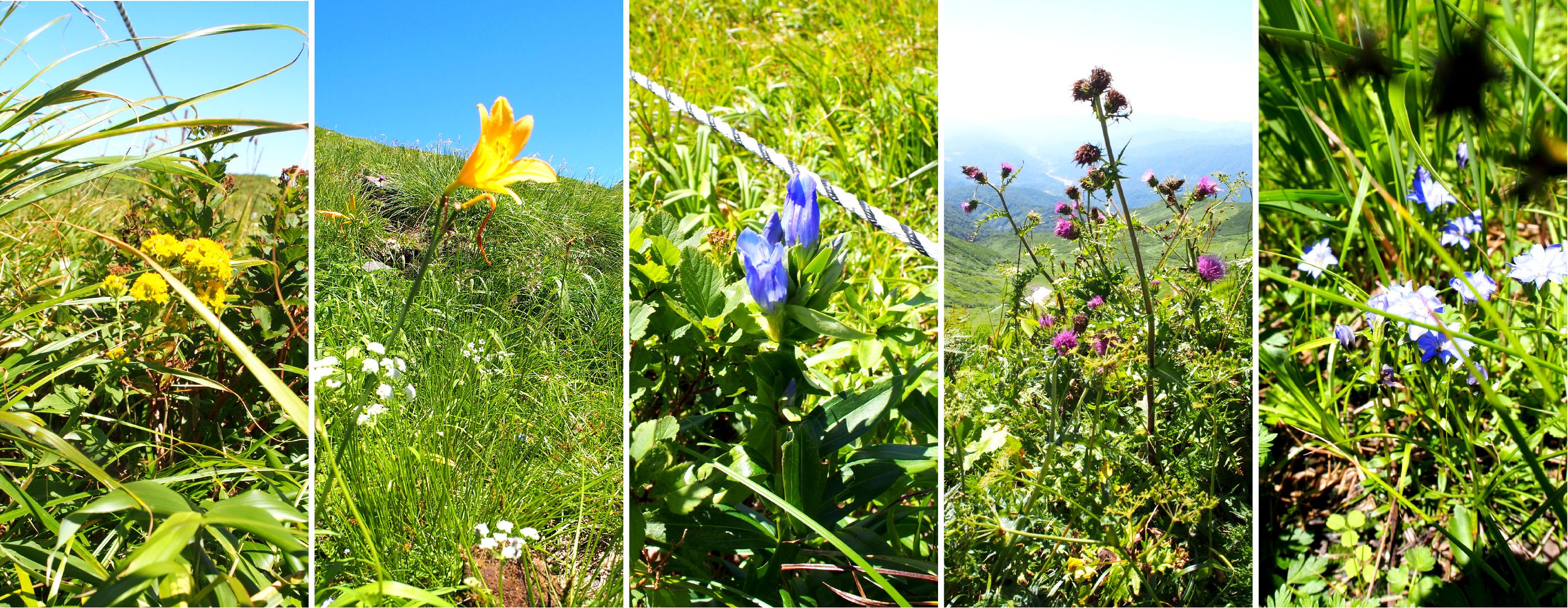 月山の花たち