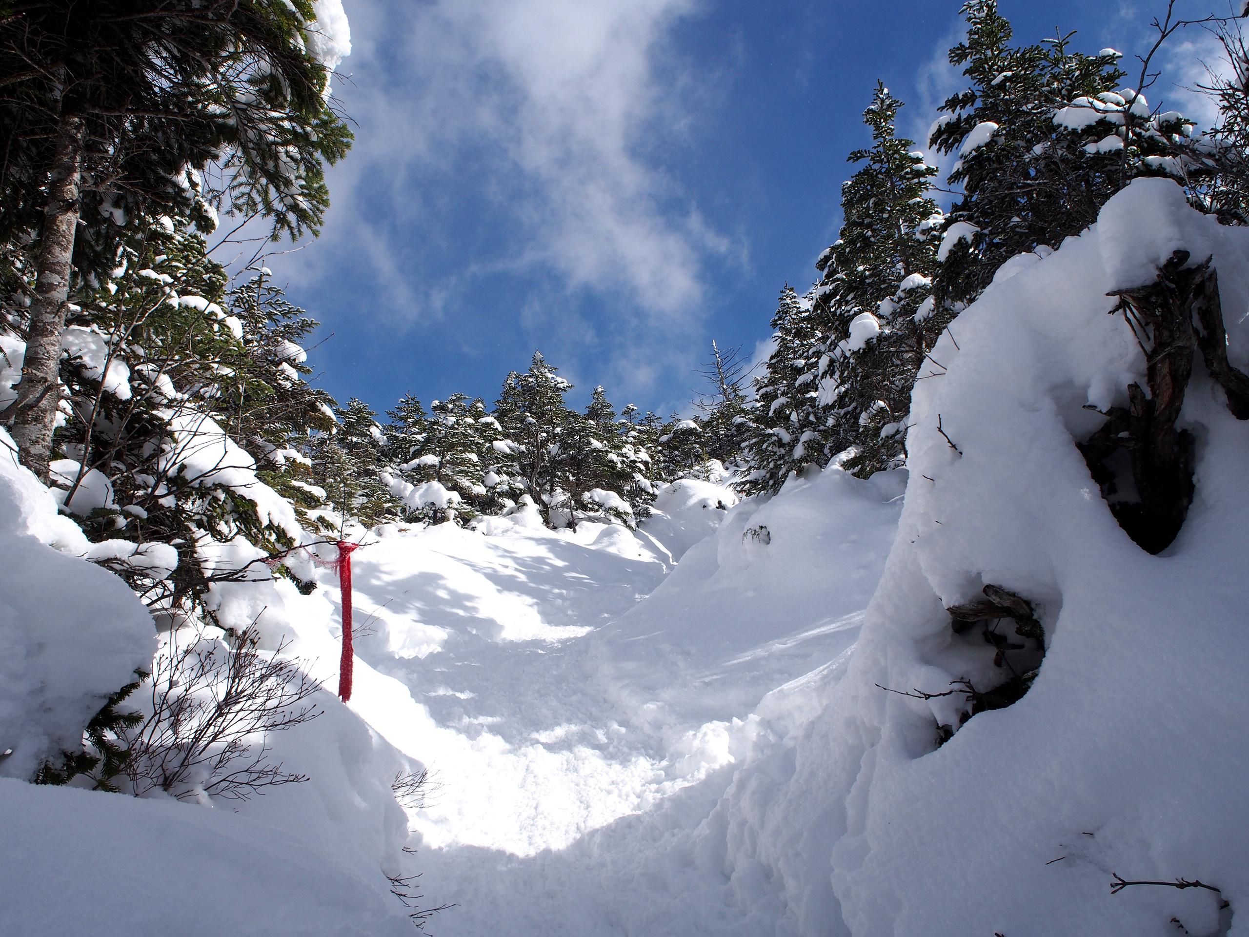 表コース登山道
