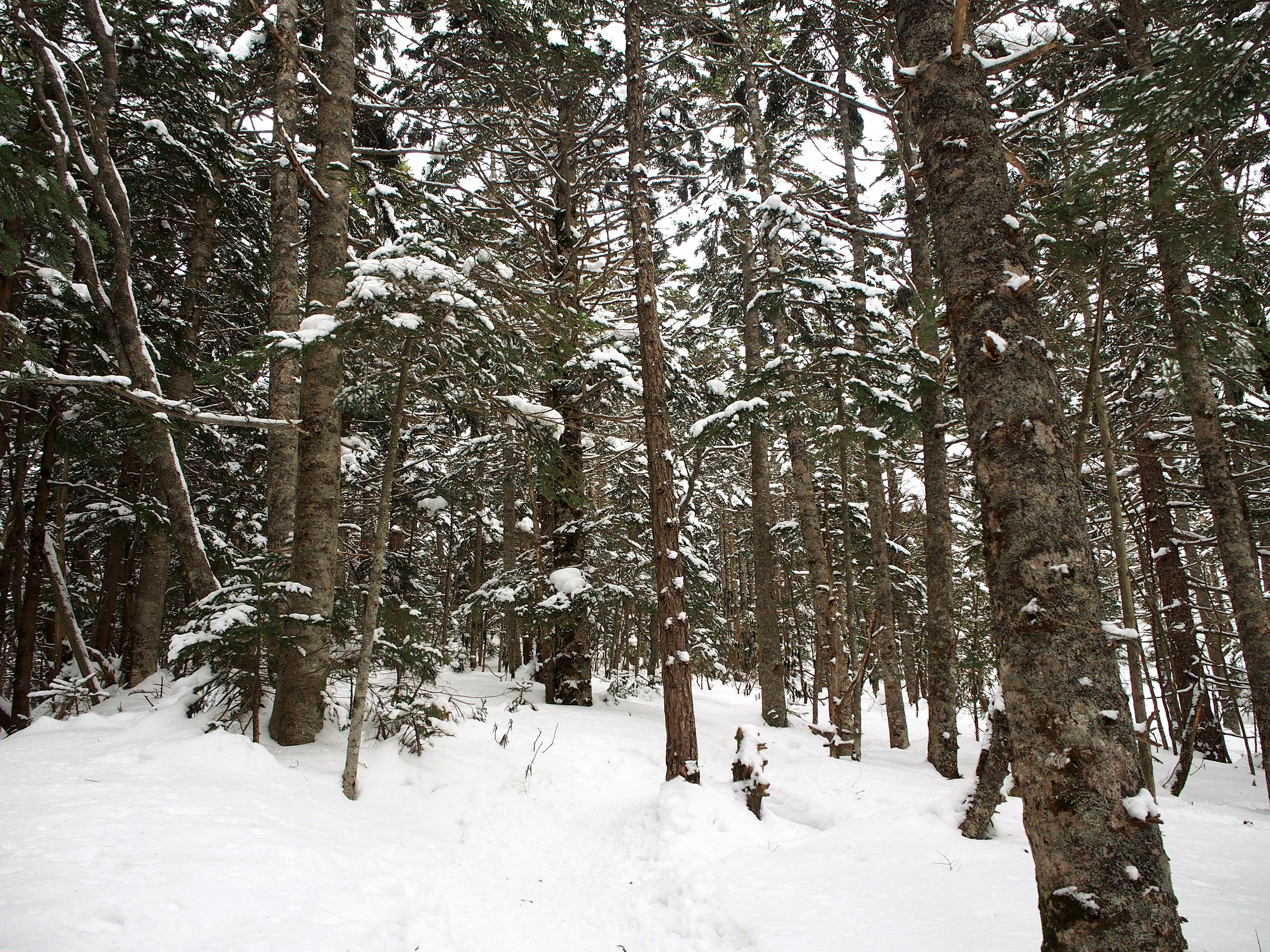 中コースの樹林帯